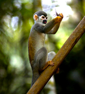 package tours to view wildlife in Brazil